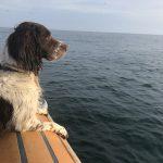 La navigation avec votre animal de compagnie? Avec un RENT MY BOAT, c'est facile.